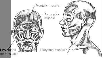 Botox Tokyo Japan, Restylane Injections Japan - Dermal Filler